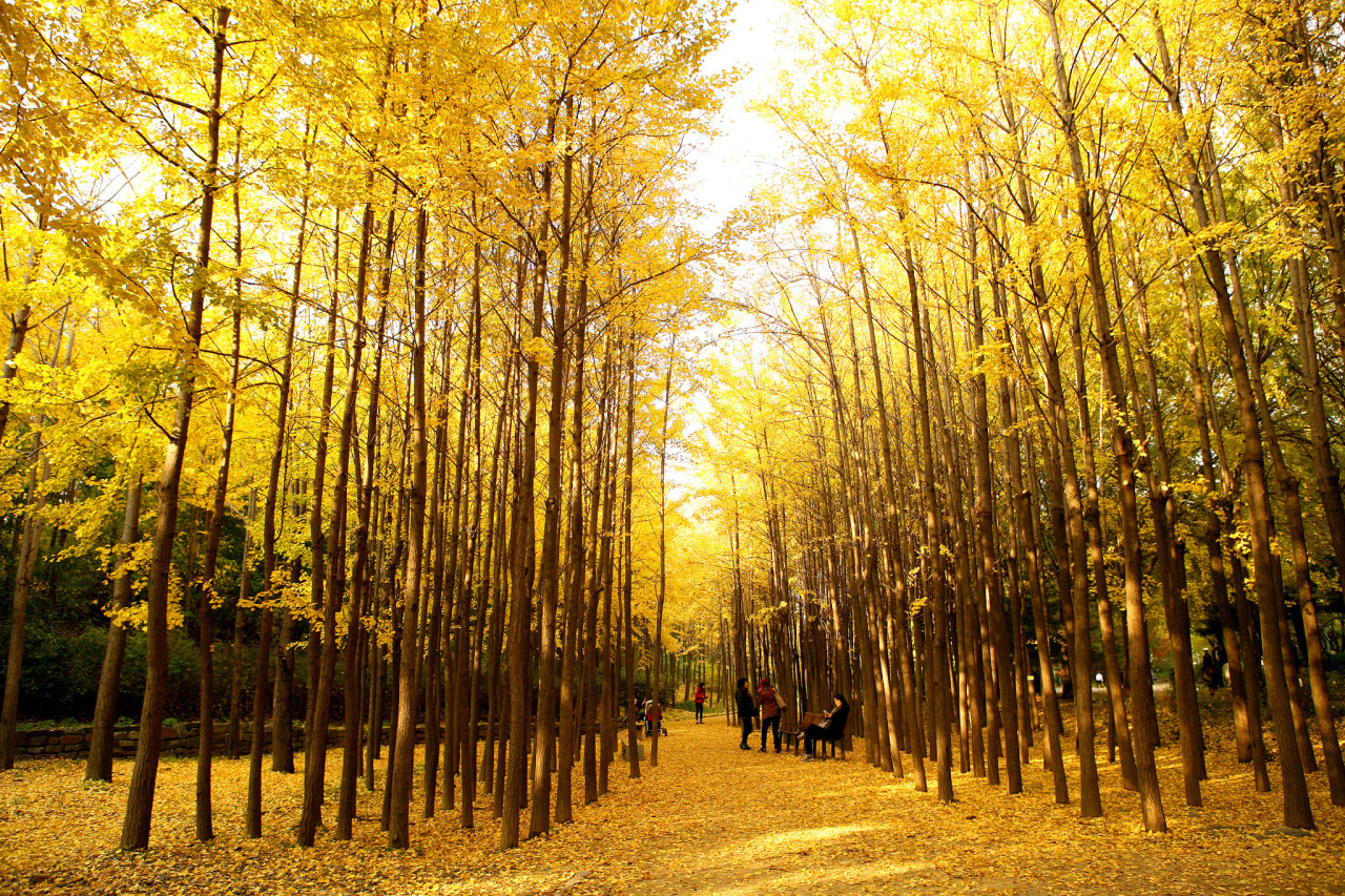 Image result for seoul forest in autumn