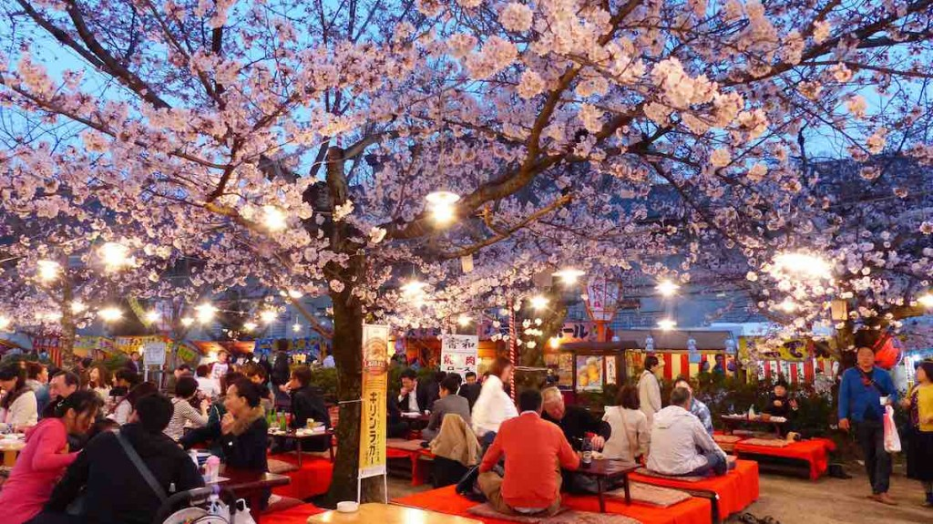 Maruyama Park in Kyoto is a lovely place for you to view cherry blossoms at night too! Night time picnic parties are called Yozakura.